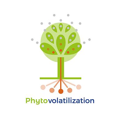 Phytovolatilization